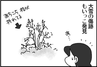 大雪の跡.jpg