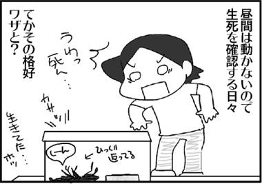 むしの学校26.jpg