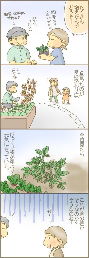 嫁入り苺.jpg