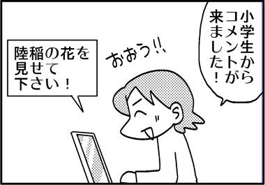陸稲コメント1.jpg
