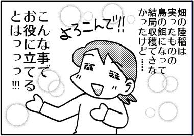 陸稲コメント2.jpg