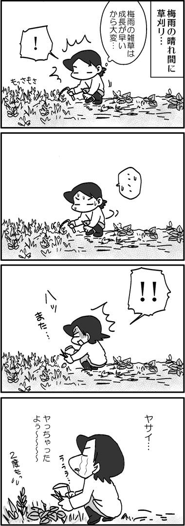 草刈りの宿命.jpg