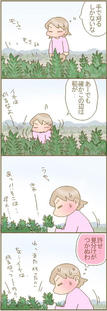 陸稲発芽2.jpg