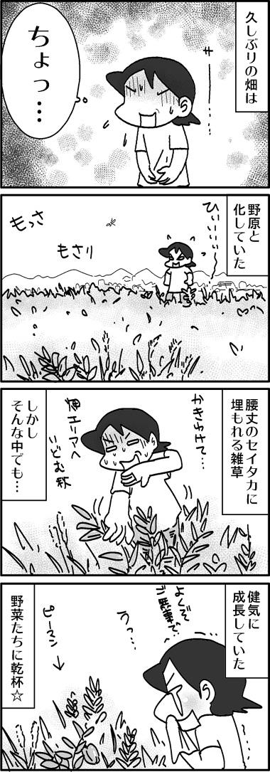 ひさびさ畑.jpg