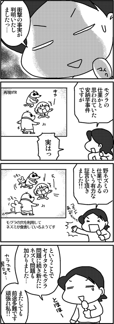 2011芋ほり7.jpg