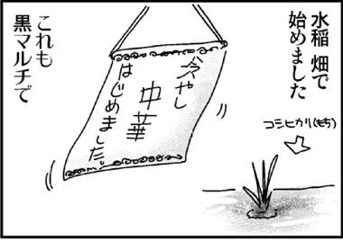 2011水稲1.jpg