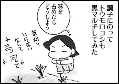 2011トウモロコシ1jpg.jpg