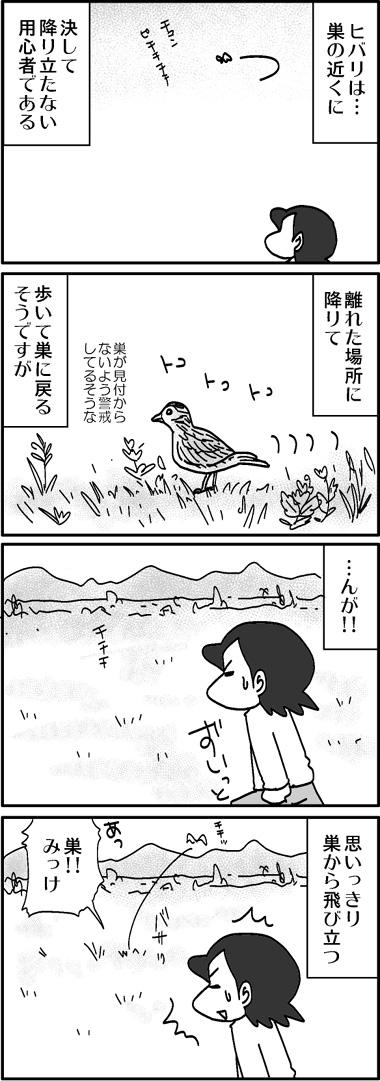 ヒバリの巣2.jpg