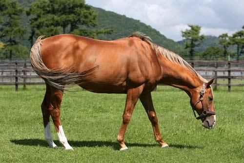 オレハマッテルゼ フォーカルポイントは終いの脚が切れいい瞬発力しているな...   みんなのお馬