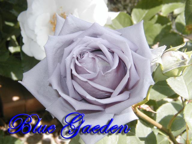 青のレクイエム1