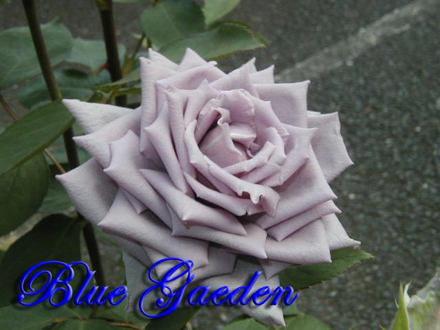 青のレクイエム2