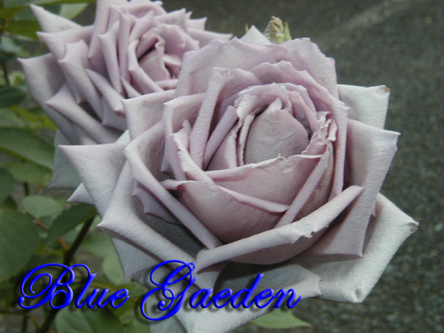 青のレクイエム3