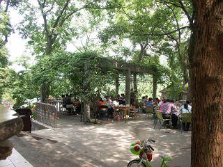 龍井の茶農家の庭