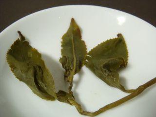 梨山高冷茶葉底