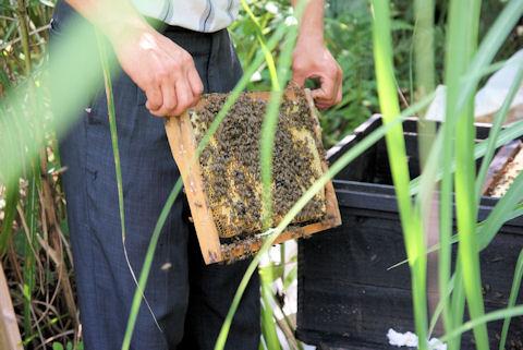 蜂がびっしり