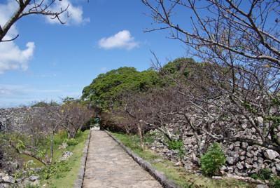 カンヒザクラの並木