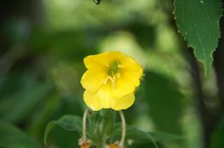 原生花園の花4