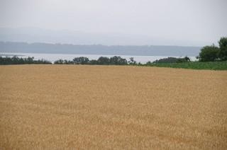 小麦畑と網走湖
