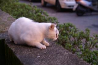 九イ分の猫
