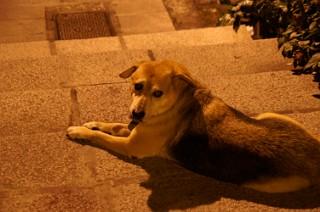 九イ分の犬