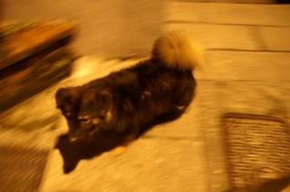 九イ分の犬2