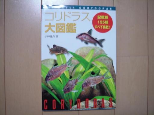 20080506 コリドラス大図鑑