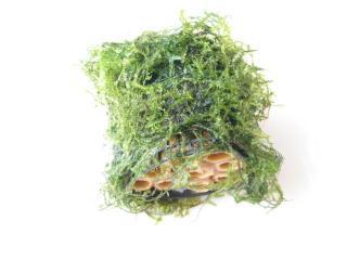 ウィローモスの竹ハウス