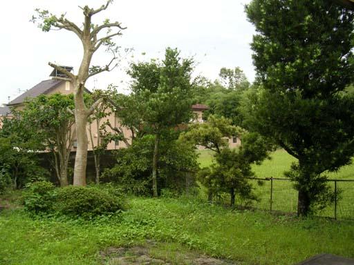 田舎の庭.jpg