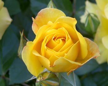 roz.jpg
