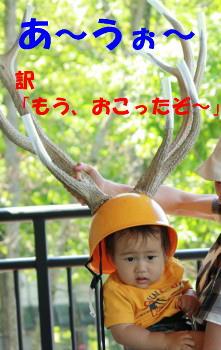 IMG_3894_1.jpg