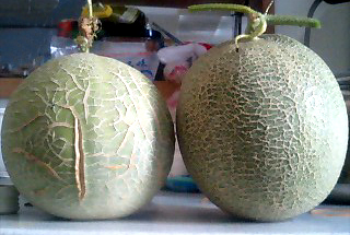 melon2ko
