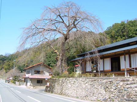 080321-前川桜