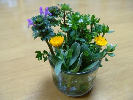 080317-野の花