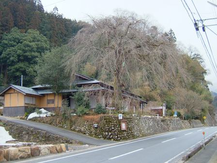 080304-前川桜
