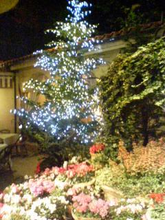 リストランテ・ASO クリスマスツリー