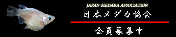 jma1-2[1].jpg