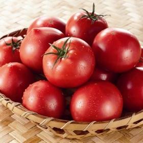 丸かじりフルーツトマト