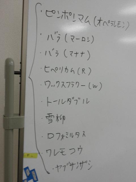 PA160253.JPG