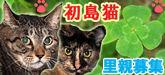初島の猫☆里親募集