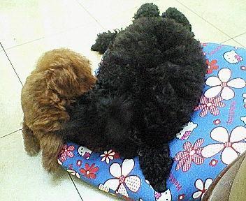 キキ&ウラン☆.JPG