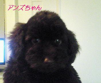 アンズちゃん 2007.1.6.JPG
