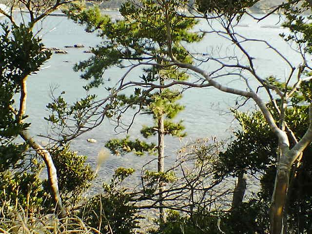 木々の向こうには海が...。
