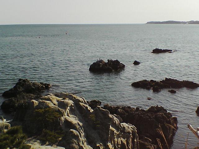崎の浜の岩を...。