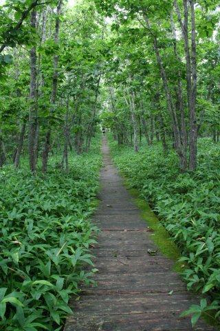 北斗遺跡森の中