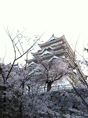 福山城お花見2