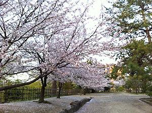 福山城お花見5