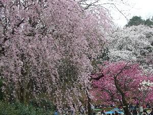0803三ッ池公園1.JPG
