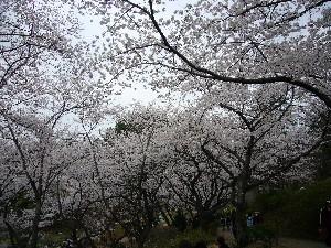 0803三ッ池公園3.JPG