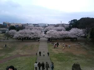 四季の森3.JPG