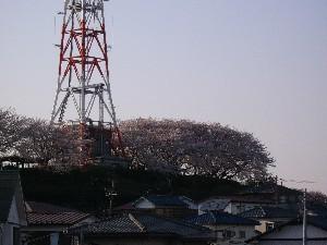 060331桜6.JPG